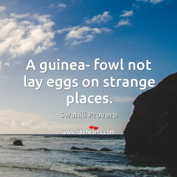 A guinea- fowl not lay eggs on strange places. Image