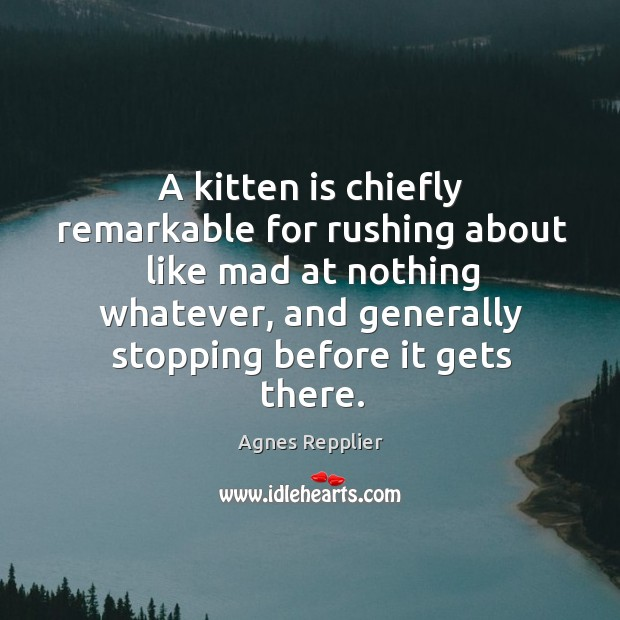 A kitten is chiefly remarkable for rushing about like mad at nothing whatever Image