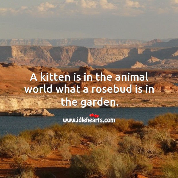 A kitten is in the animal world what a rosebud is in the garden. Image