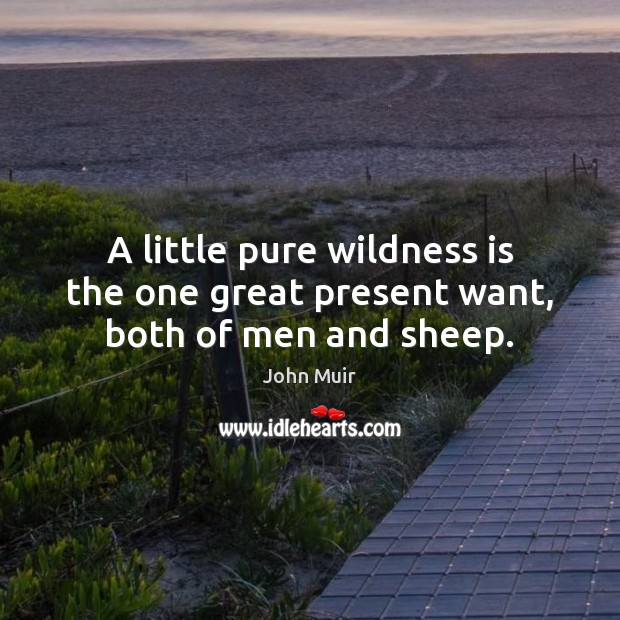 A little pure wildness is the one great present want, both of men and sheep. Image