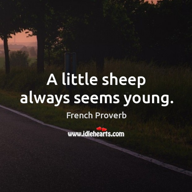 Image, A little sheep always seems young.