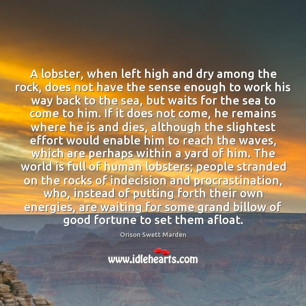 A lobster, when left high and dry among the rock, does not Procrastination Quotes Image