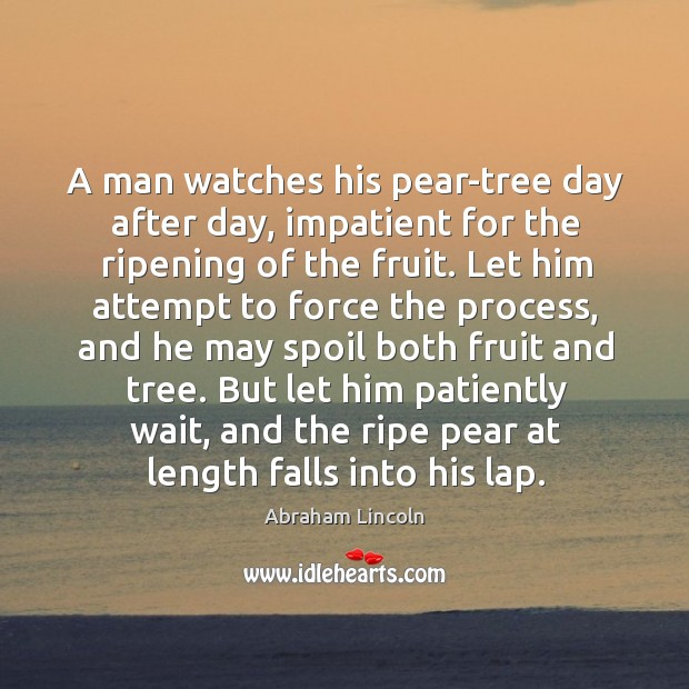 Image, A man watches his pear-tree day after day, impatient for the ripening