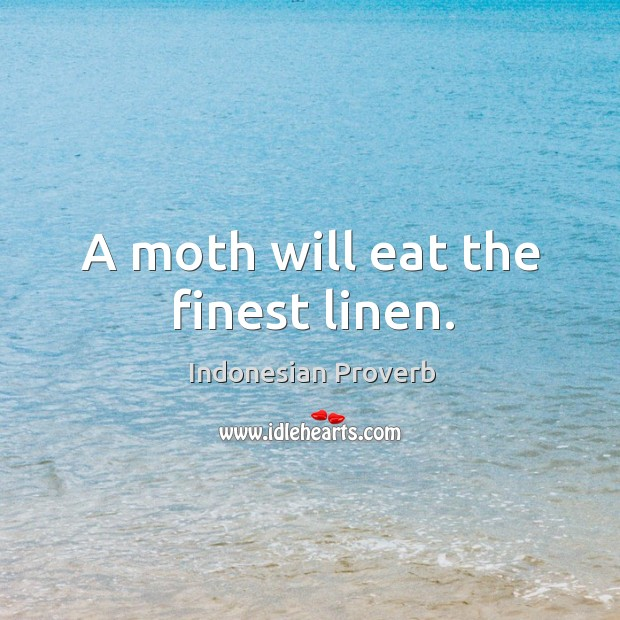 A moth will eat the finest linen. Indonesian Proverbs Image