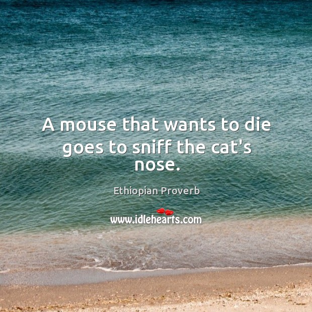 A mouse that wants to die goes to sniff the cat's nose. Ethiopian Proverbs Image