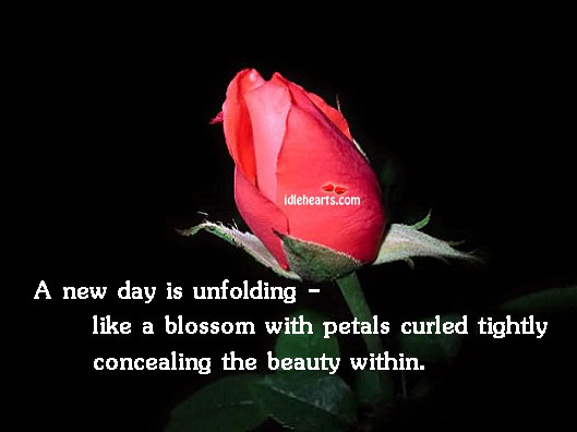 A New Day Is Unfolding – Like A Blossom…