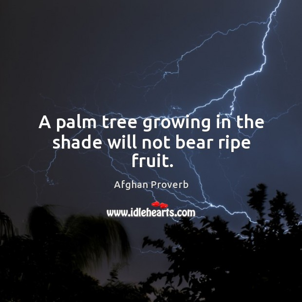 A palm tree growing in the shade will not bear ripe fruit. Afghan Proverbs Image