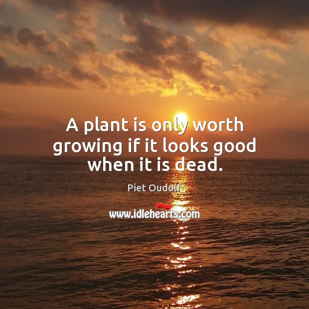 A plant is only worth growing if it looks good when it is dead. Image