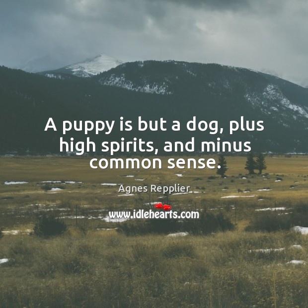 A puppy is but a dog, plus high spirits, and minus common sense. Image