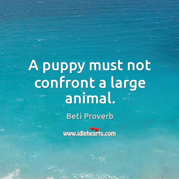 A puppy must not confront a large animal. Beti Proverbs Image