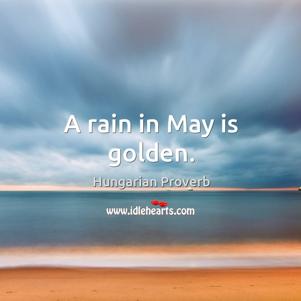 A rain in may is golden. Image