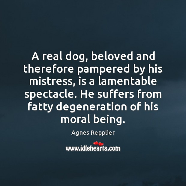 Image, A real dog, beloved and therefore pampered by his mistress, is a