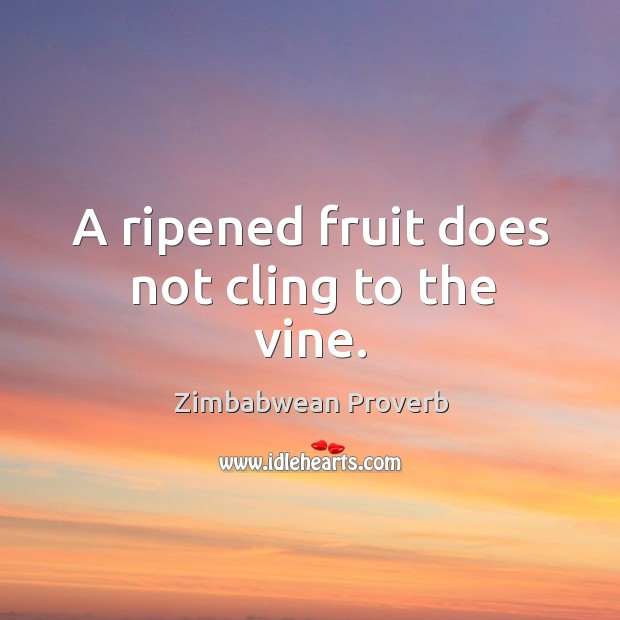 A ripened fruit does not cling to the vine. Zimbabwean Proverbs Image