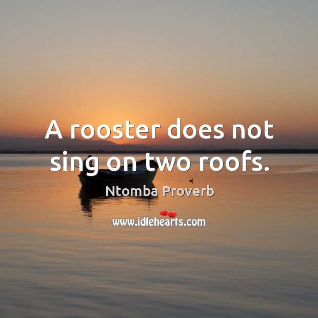 A rooster does not sing on two roofs. Ntomba Proverbs Image