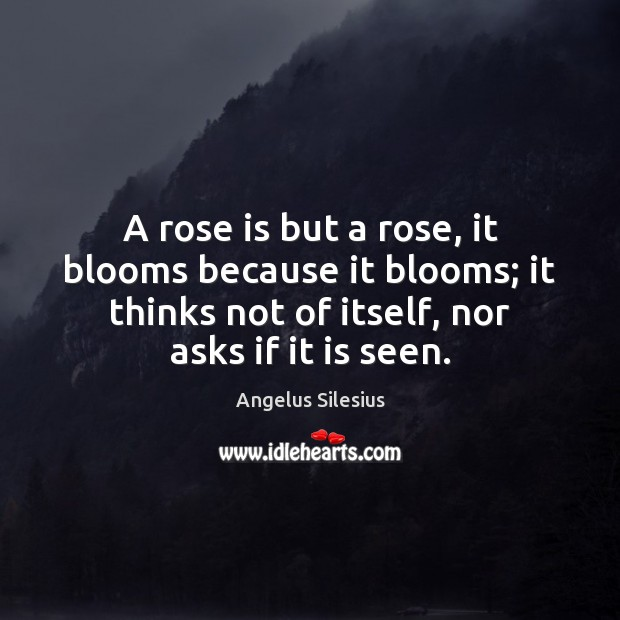 Image, A rose is but a rose, it blooms because it blooms; it