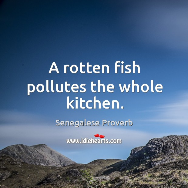 Image, A rotten fish pollutes the whole kitchen.