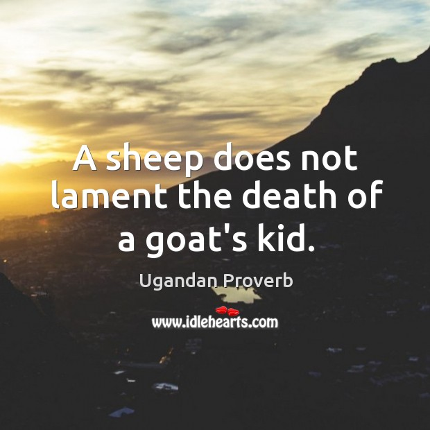 A sheep does not lament the death of a goat's kid. Ugandan Proverbs Image