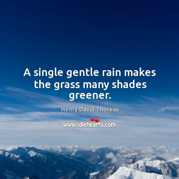 A single gentle rain makes the grass many shades greener. Image