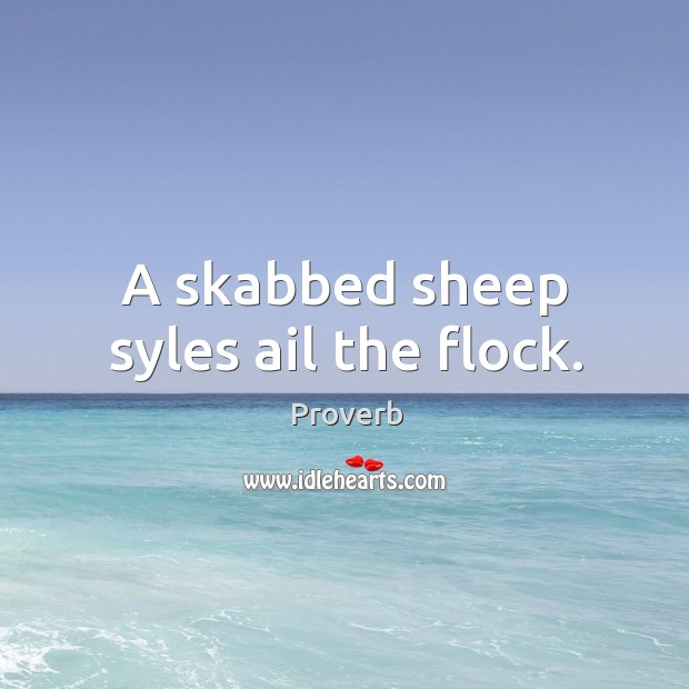 A skabbed sheep syles ail the flock. Image