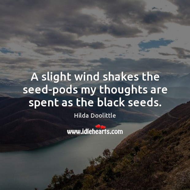 A slight wind shakes the seed-pods my thoughts are spent as the black seeds. Hilda Doolittle Picture Quote