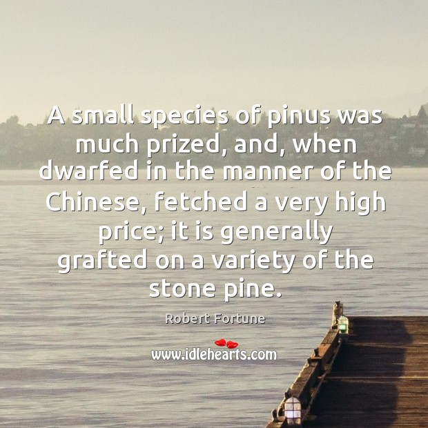 A small species of pinus was much prized, and, when dwarfed in the manner of the chinese Robert Fortune Picture Quote