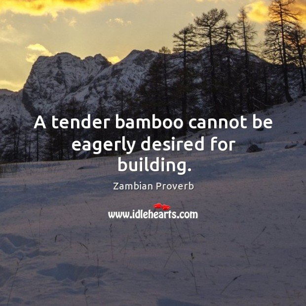 A tender bamboo cannot be eagerly desired for building. Zambian Proverbs Image