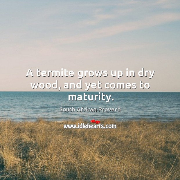 Image, A termite grows up in dry wood, and yet comes to maturity.