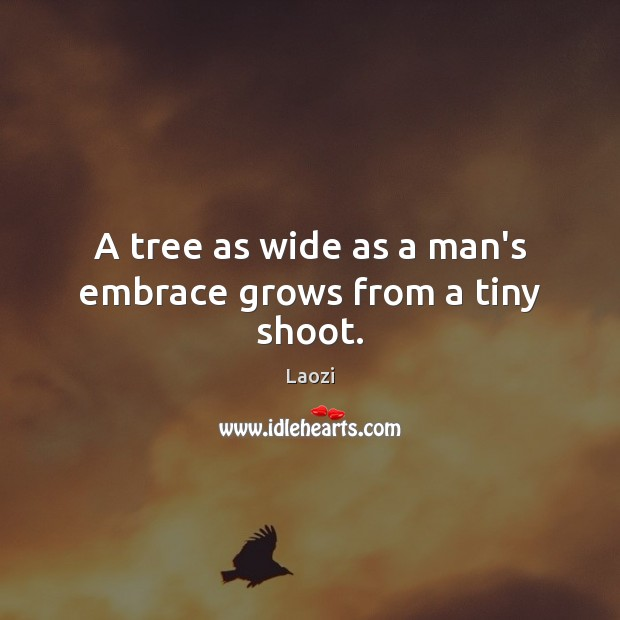 Image, A tree as wide as a man's embrace grows from a tiny shoot.