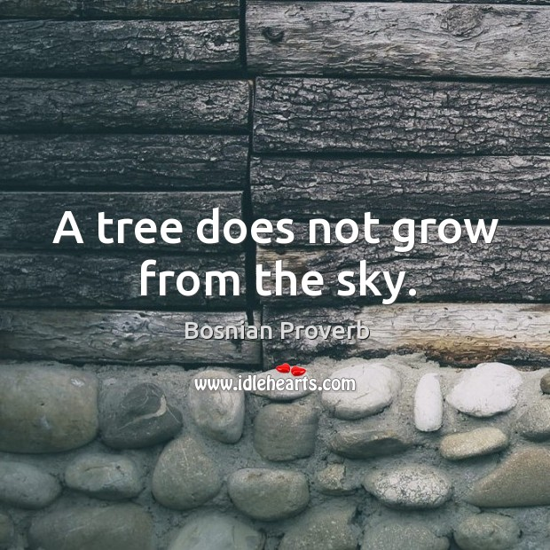 Image, A tree does not grow from the sky.