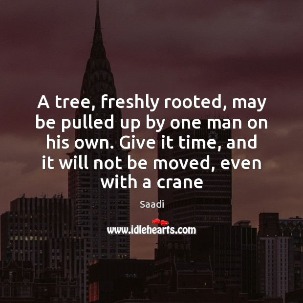 A tree, freshly rooted, may be pulled up by one man on Saadi Picture Quote