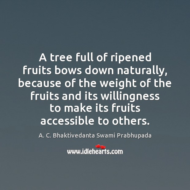 Image, A tree full of ripened fruits bows down naturally, because of the
