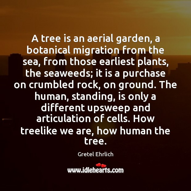 A tree is an aerial garden, a botanical migration from the sea, Gretel Ehrlich Picture Quote