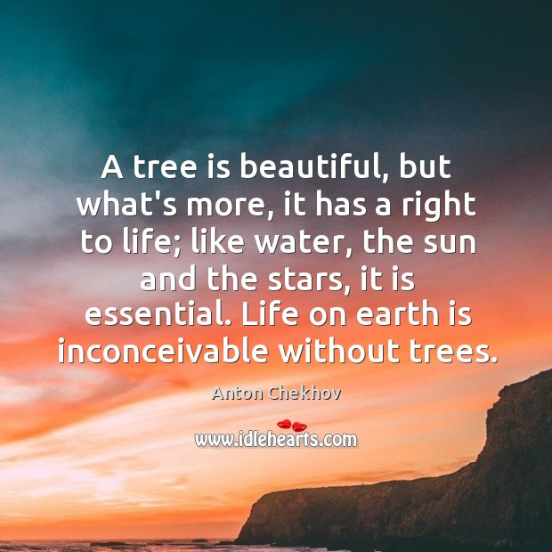 Image, A tree is beautiful, but what's more, it has a right to