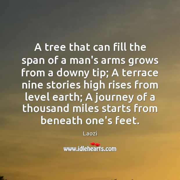 A tree that can fill the span of a man's arms grows Image