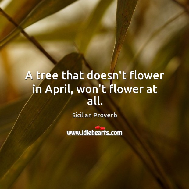 Image, A tree that doesn't flower in april, won't flower at all.