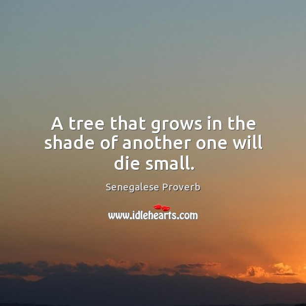 A tree that grows in the shade of another one will die small. Senegalese Proverbs Image