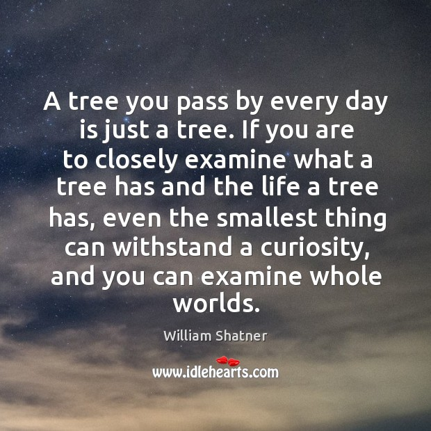 A tree you pass by every day is just a tree. If Image