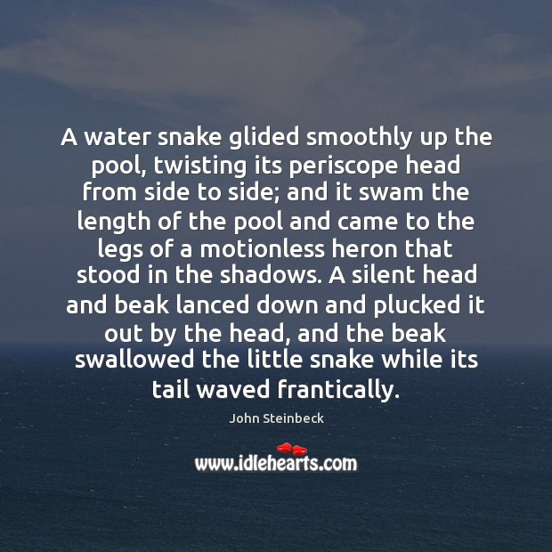 A water snake glided smoothly up the pool, twisting its periscope head John Steinbeck Picture Quote