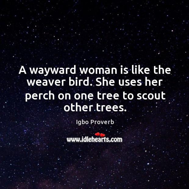 A wayward woman is like the weaver bird. Igbo Proverbs Image