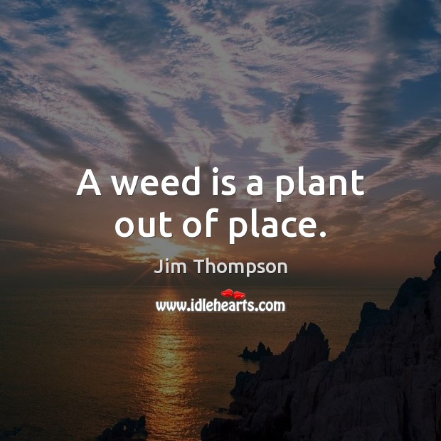 Image, A weed is a plant out of place.