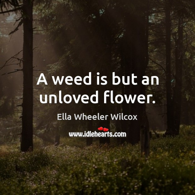 A weed is but an unloved flower. Ella Wheeler Wilcox Picture Quote