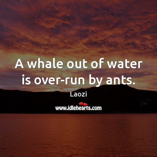 A whale out of water is over-run by ants. Image