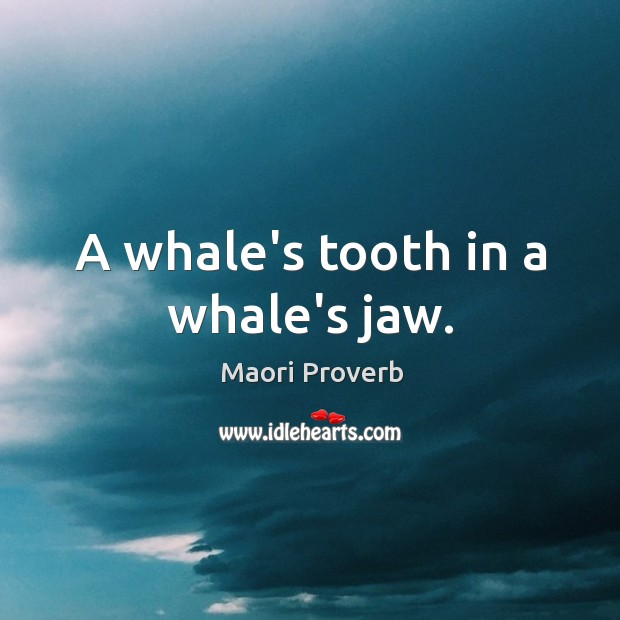 A whale's tooth in a whale's jaw. Maori Proverbs Image