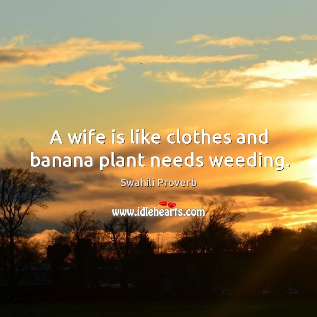 Image, A wife is like clothes and banana plant needs weeding.