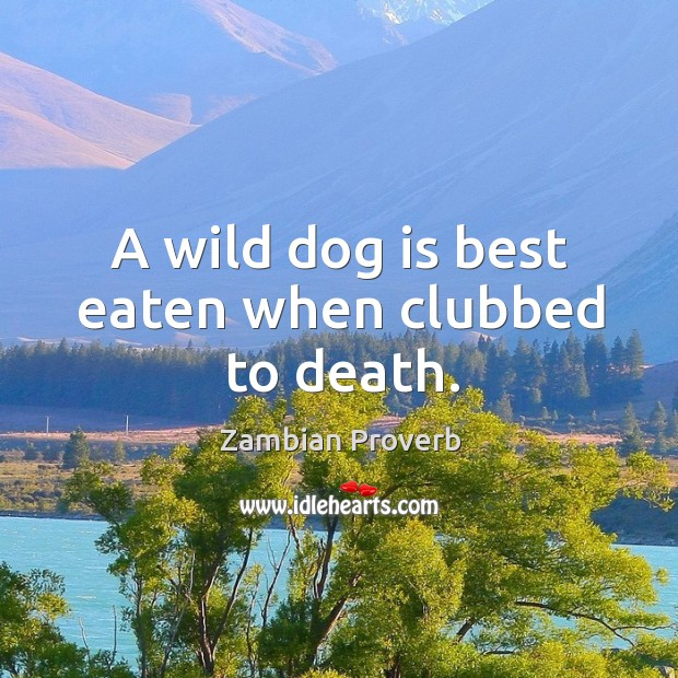 Image, A wild dog is best eaten when clubbed to death.