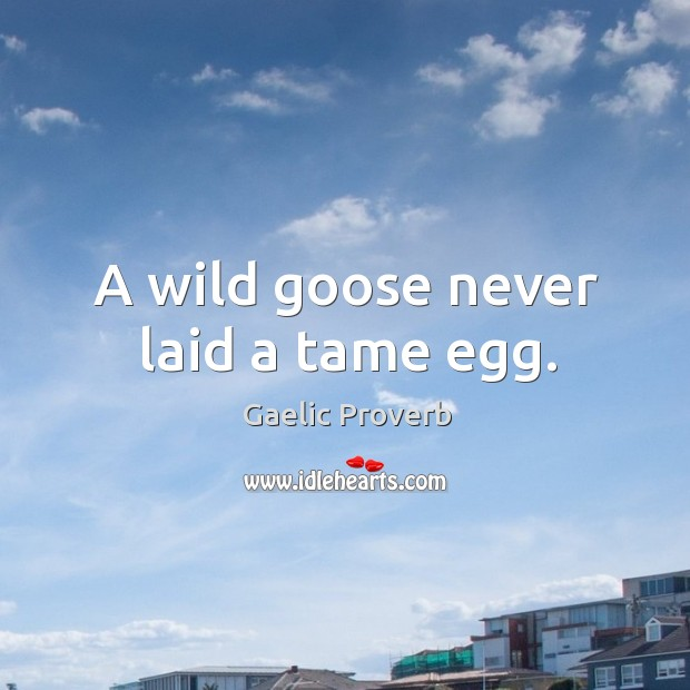 A wild goose never laid a tame egg. Gaelic Proverbs Image