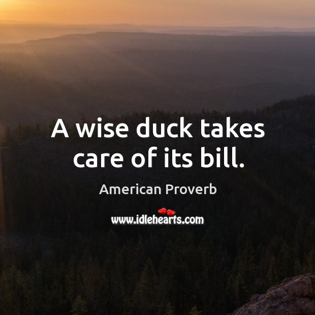 Image, A wise duck takes care of its bill.