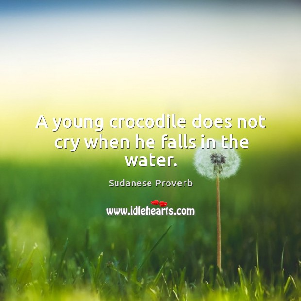 A young crocodile does not cry when he falls in the water. Sudanese Proverbs Image