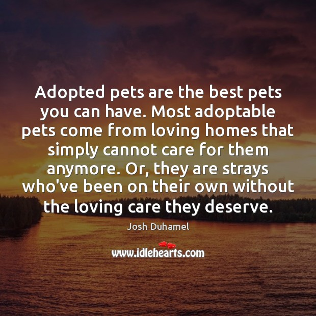 Adopted pets are the best pets you can have. Most adoptable pets Image