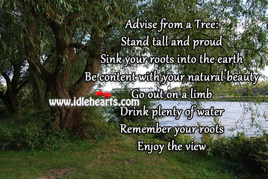 Advise from a tree Image